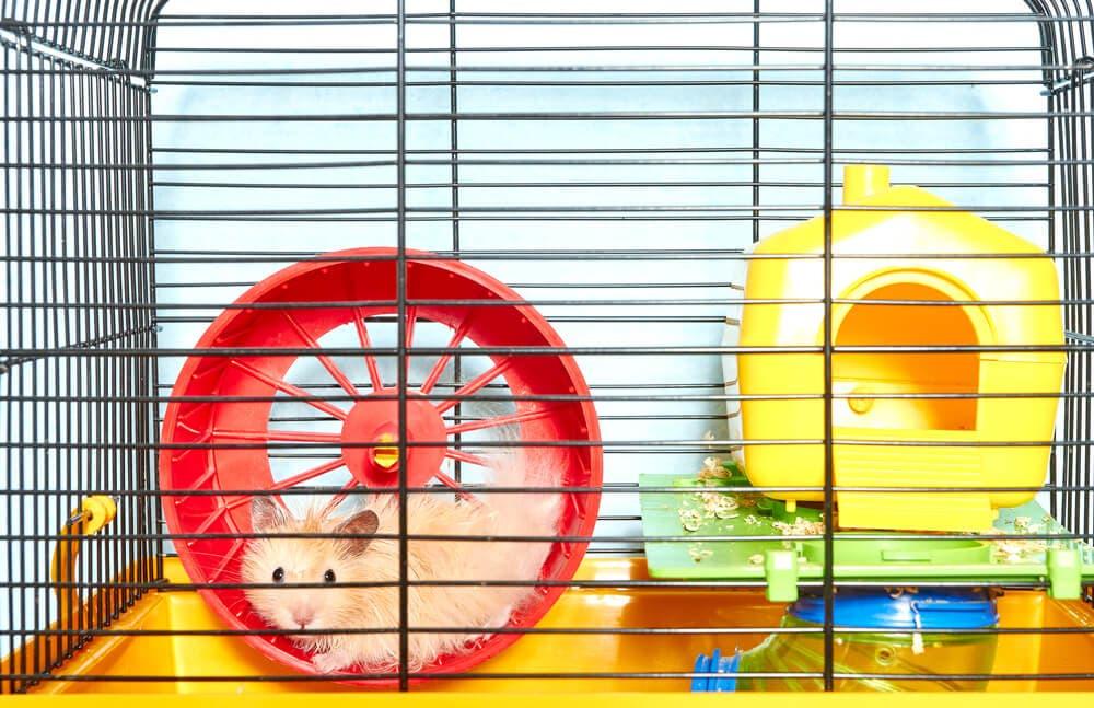 Hamster bakımının püf noktaları