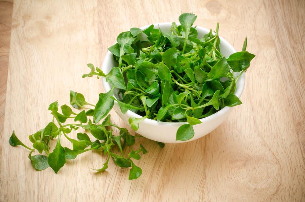 Mikro Yeşillikler Hakkında Bilmek İstediğiniz Her Şey