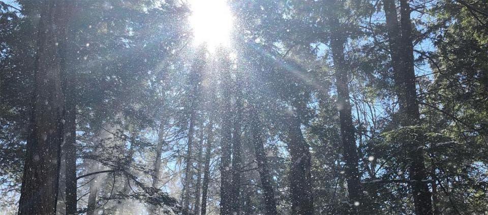 Ağaçları 5 duyumuzla takdir etmek