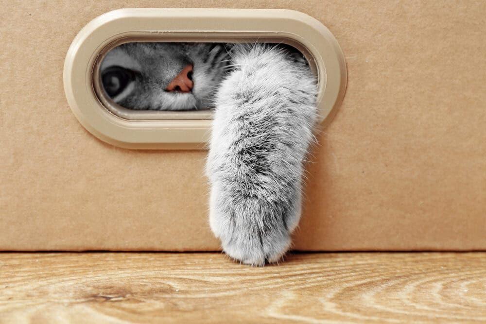 Kedinizin sıkıldığına dair 5 işaret ve çözümleri