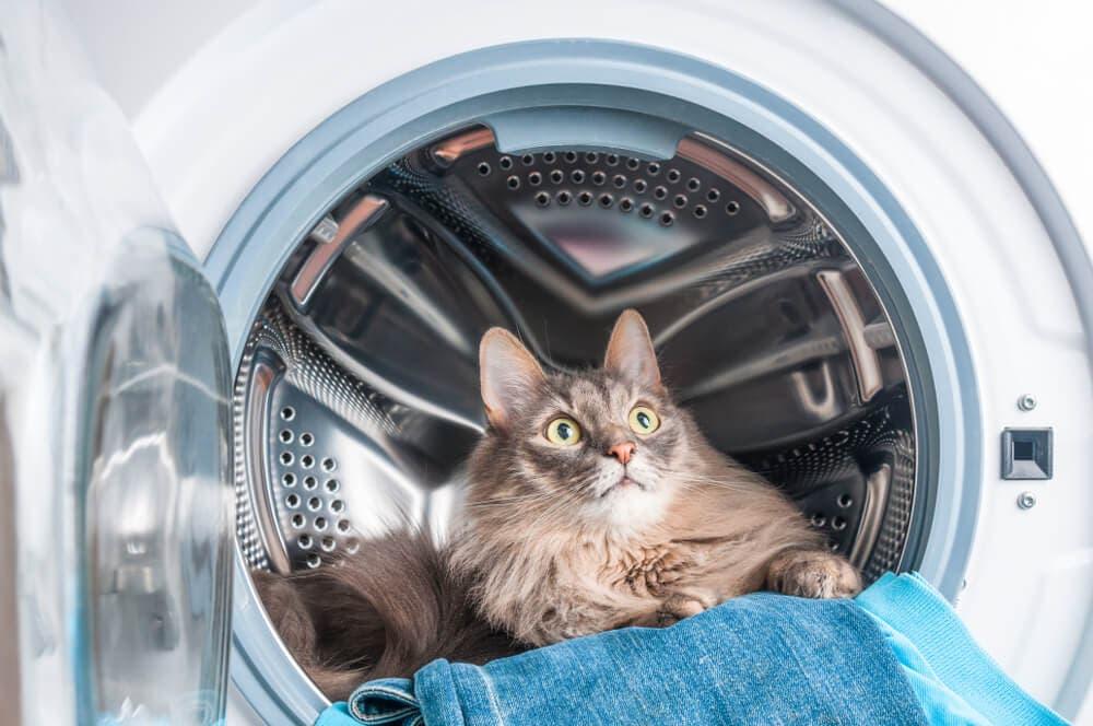 Evde kediler için tehlike oluşturan 7 şey