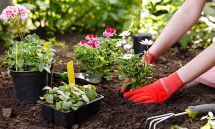 Bitkilerle ilgilenin
